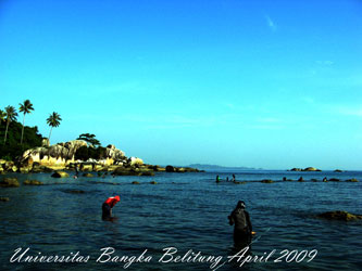 Foto Praktikum Avertebrata Air di Rataan Terumbu Karang Pantai Teluk Limau Sungailiat Kabupaten Bangka