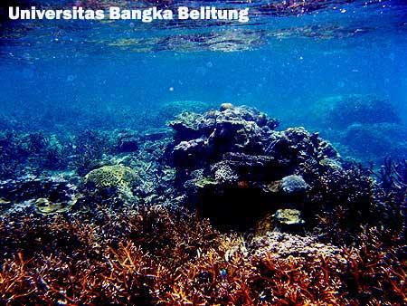 Coral Reef) Kering di Perairan Sungailiat Bangka Belitung Indonesia
